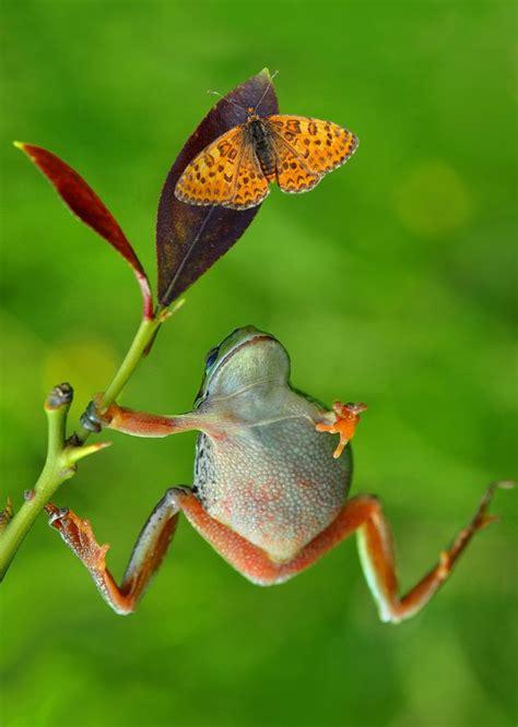 hunt  hunter  mustafa oeztuerk funny frogs animals