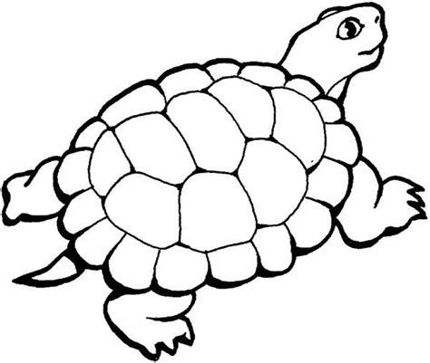 Coloring Turtle by Turtle Coloring Pages Bestofcoloring