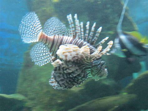 tarif aquarium grau du roi 28 images le seaquarium du grau du roi vivre partir d 233 couvrir