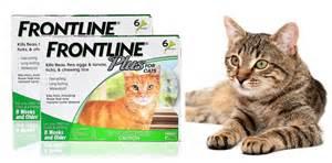 frontline cats frontline plus cats flea treatment use it or avoid it