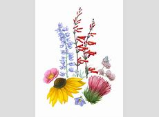 2016 Wildflower Show Workshop Drawing Wildflowers with