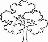 Tree Oak Coloring Line Clipart Colouring Outline Pages Clipartist Salvo Info Apple sketch template