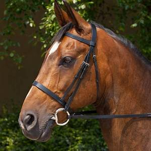 Horse Life and Love: All About Bridles