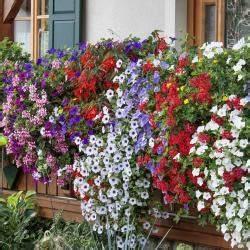Petunien Samen Kaufen : balkonblumen pflanzen pflege und tipps mein sch ner garten ~ Frokenaadalensverden.com Haus und Dekorationen