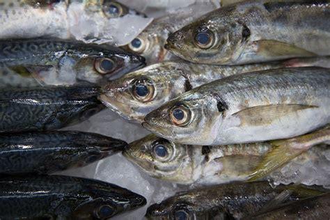 future  nova scotia aquaculture  big salmon