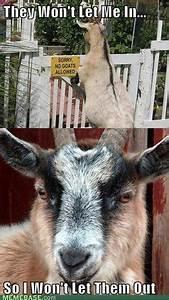 Grass Goat Meme By: Me | BAHAHAHAHAHAHA | Pinterest
