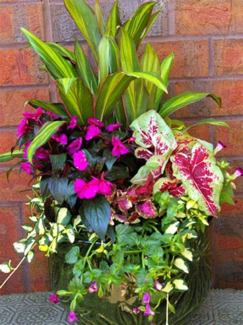 shade flowers for pots 17 best images about container gardening ideas on pinterest container plants fall containers
