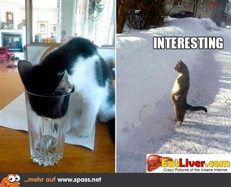 sehr interessant lustige bilder auf spassnet