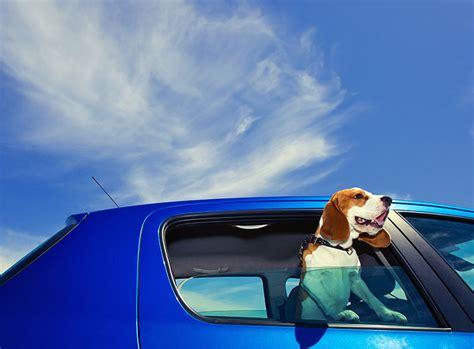 hundetransport im auto hundetransport autofahrt mit dem vierbeiner zooroyal magazin
