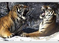 South Korea National Animal Tiger 123Countriescom
