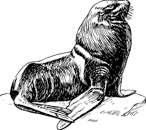 seal clipart black and white free seal clipart 1 page of free to use images