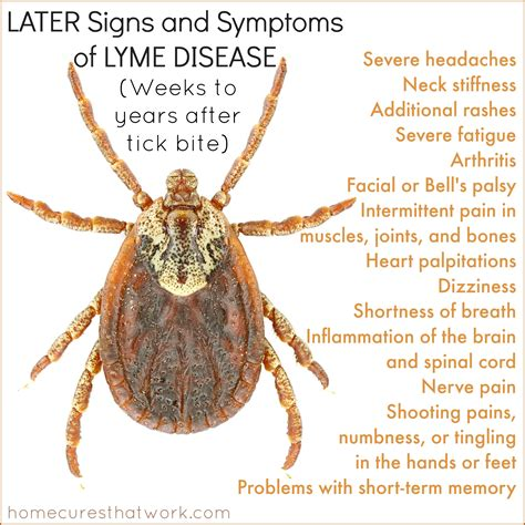 The Reality Of Lyme Disease Infectiousness