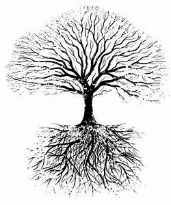 Deep Roots | CREGEL