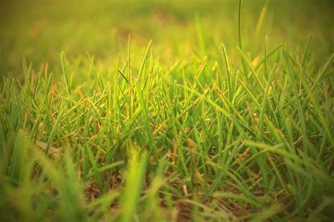 grass lawn rust diseases field identifying treating oklahoma common background nomics arbor brown jooinn