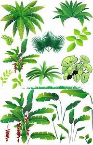 Rainforest Plants Vector