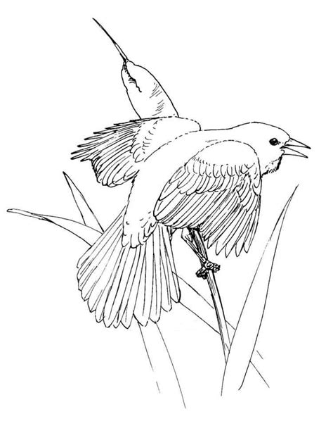 Coloring Top by Thrush Coloring Pages To And Print For Free
