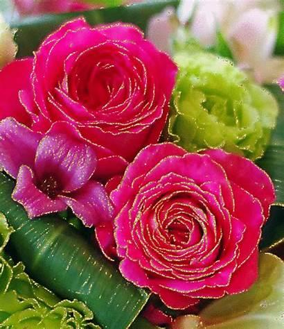 Flores Gifs Encontradas Paradise Paraiso Meu Das
