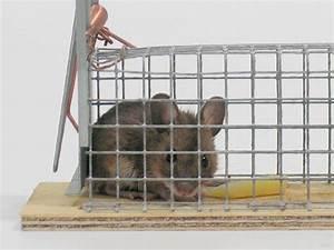 Maus In Der Küche : s e maus in der falle foto bild tiere tier und mensch natur bilder auf fotocommunity ~ Eleganceandgraceweddings.com Haus und Dekorationen