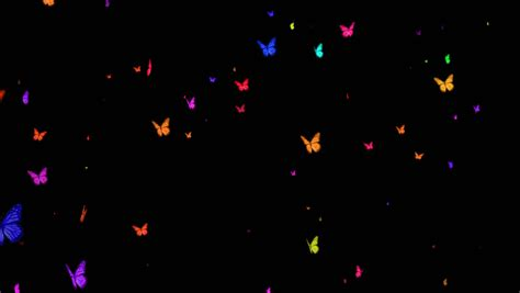Butterfly overlay Footage | Stock Clips