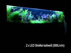 Led Leiste 2m : wandaquarium 2 40 meter mit led streifen beleuchten youtube ~ Eleganceandgraceweddings.com Haus und Dekorationen