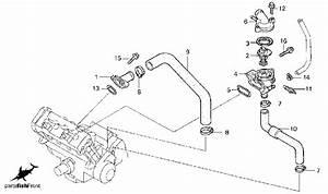 2000 Honda Cbr 600 F4 Engine Diagram  Honda  Wiring