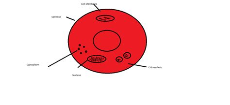 2d labelled diagram red blood cells