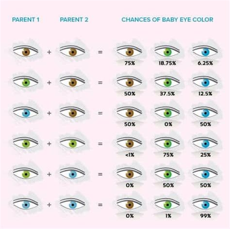 baby eye color calculator baby eye color calculator chart and predictor baby
