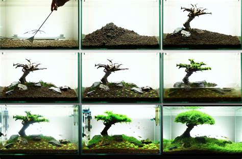 How To Make Aquascape how to create your aquascape aquascaping