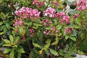 Balkonpflanzen Sonnig Winterhart : winterharte balkonpflanzen diese 33 k belpflanzen sind ~ Michelbontemps.com Haus und Dekorationen