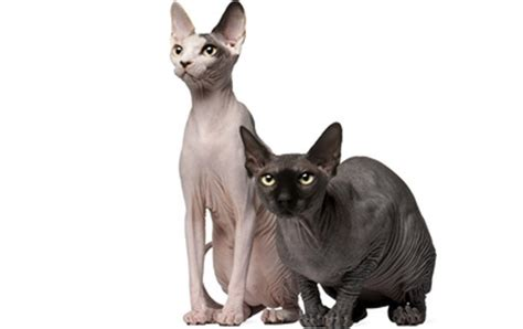 Top 23 Family-friendly Cat Breeds