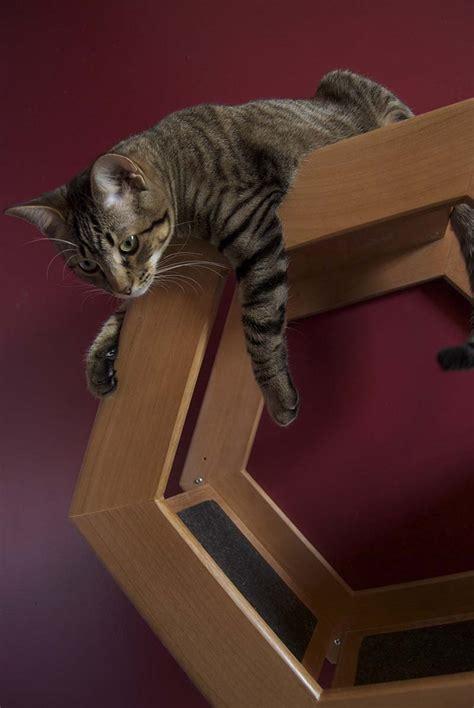 wall mounted cat shelf habicat  griffith designs