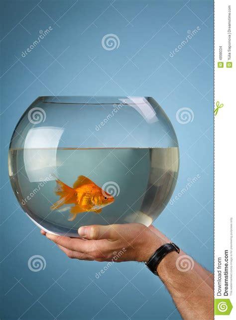 petits poissons d or dans un aquarium rond images stock image 4898034