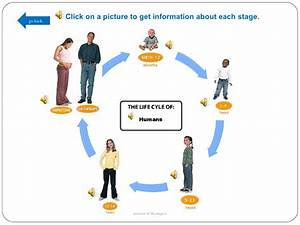 Human Life Cycle Stages For Kids