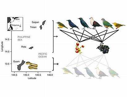 Invasive Species Guam Ecology Science Boiga Brown