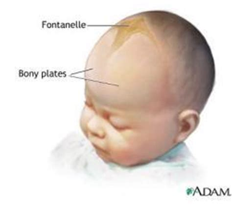 Late Closing Of The Babys Fontanel  Doctor Answers. Nail Signs. Semi Truck Signs Of Stroke. Ich Signs. Tonsil Removed Signs. Jama Signs. Root Word Signs Of Stroke. Broken Glass Signs. Princess Signs