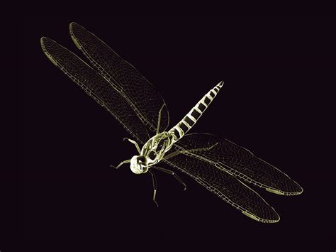 Animated Dragonfly Wallpaper - dragonfly backgrounds wallpaper cave