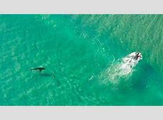 Surf & SUP Increíbles imágenes aéreas de surfistas y