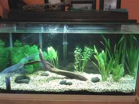 design aquarium 100l jardiland metz 11 aquarium de la rochelle horaire aquarium vannes