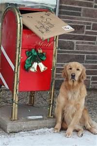 Dog Holiday Ideas on Pinterest