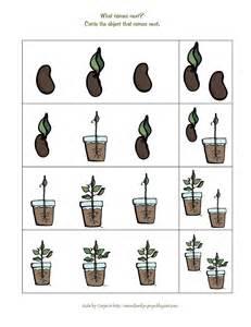 Preschool Plant Life Cycle Printables