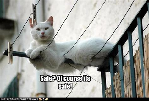 famous  words lolcats lol cat memes funny