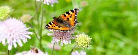 Garten Pflanzen Schmetterlinge by Schmetterlinge F 246 Rdern Im Garten Und Auf Dem Balkon Pro