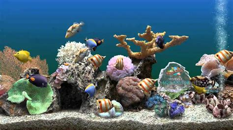 image bureau windows 8 marine aquarium 3 bildschirmschoner perdiscovideo