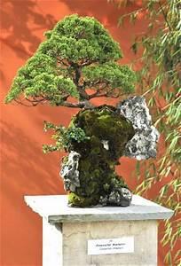 Chinesischer Wacholder Bonsai : bonsai ausstellung anl 100 jahre klg steinfurt bonsai arbeitskreis steinfurt ~ Sanjose-hotels-ca.com Haus und Dekorationen