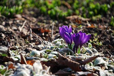 Pavasara ziedi. - Spoki - bildes 3