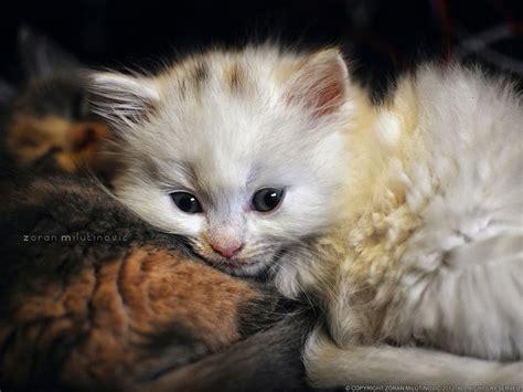 px nap time  zoran milutinovic  feline point