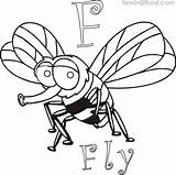 Coloring Fly Printable Coloringfolder sketch template