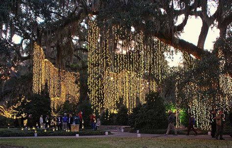 hanging christmas tree lights brookgreen gardens events and festivals page 4 of 4