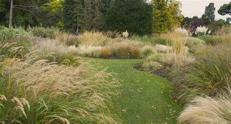 ornamental grass landscape dsc8684 blooms n food