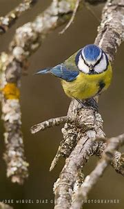 Photo taken with Canon EOS 6D - Extremadura - Animal ...